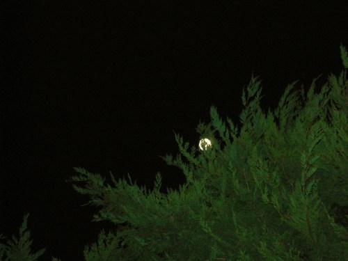 Moon friendships in the garden