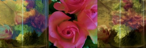 Rushing the Pink Roses into my Glass World ...