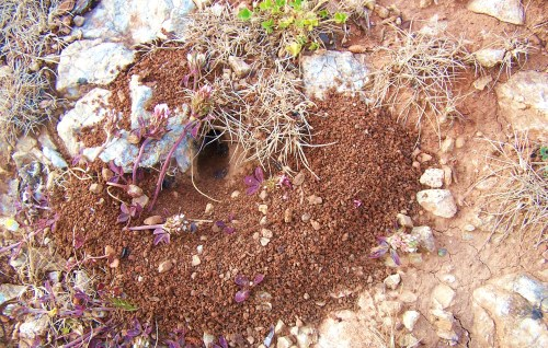 The Ant's Home,Our Home ...
